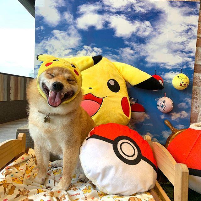 Maru é o cachorro mais sorridente do Instagram e essas fotos vão te provar isso 3
