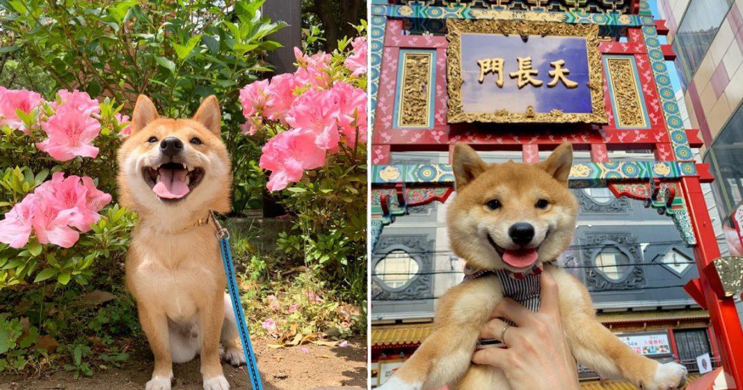 Maru é o cachorro mais sorridente do Instagram e essas fotos vão te provar isso 5