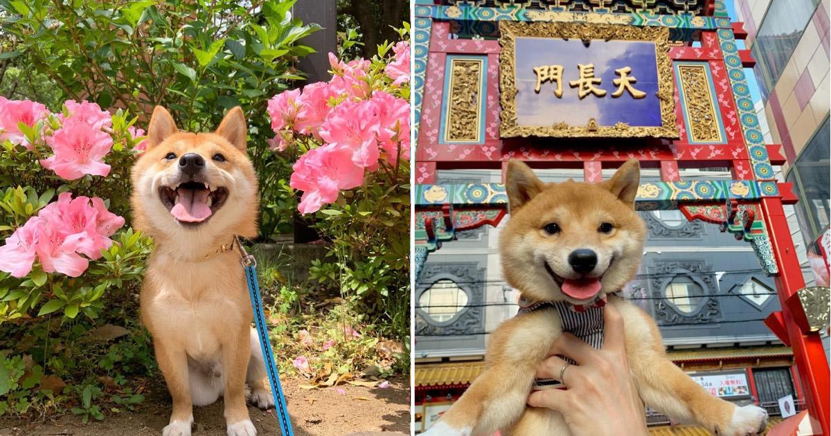 Maru é o cachorro mais sorridente do Instagram e essas fotos vão te provar isso 1