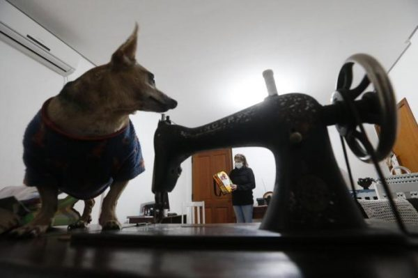 cachorrinho próximo da máquina de costura