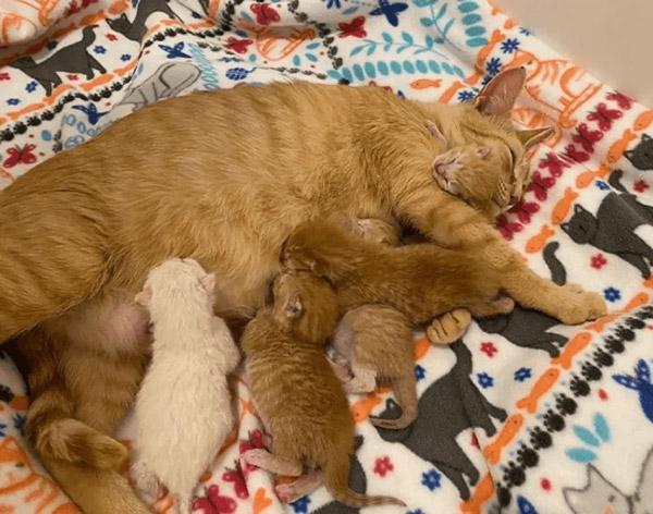 nakoma amamentando gatinhos
