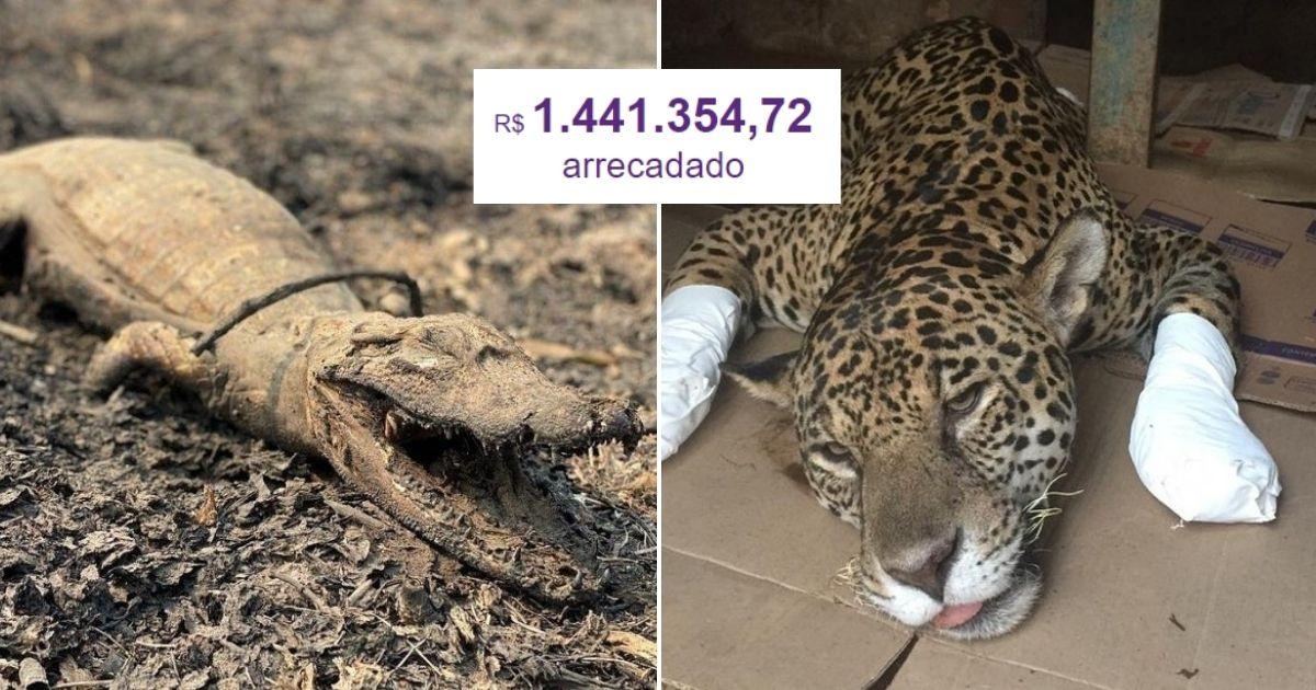 Campanha para salvar milhares de animais silvestres no Pantanal arrecada mais de R$ 1 milhão 1