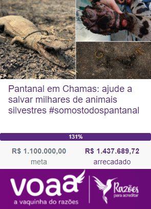 Campanha para salvar milhares de animais silvestres no Pantanal arrecada mais de R$ 1 milhão 2