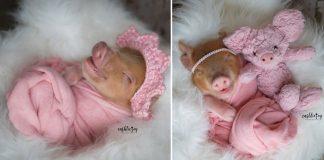 ensaio newborn de porquinha bebê