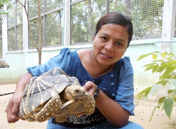 tartaruga em cativeiro