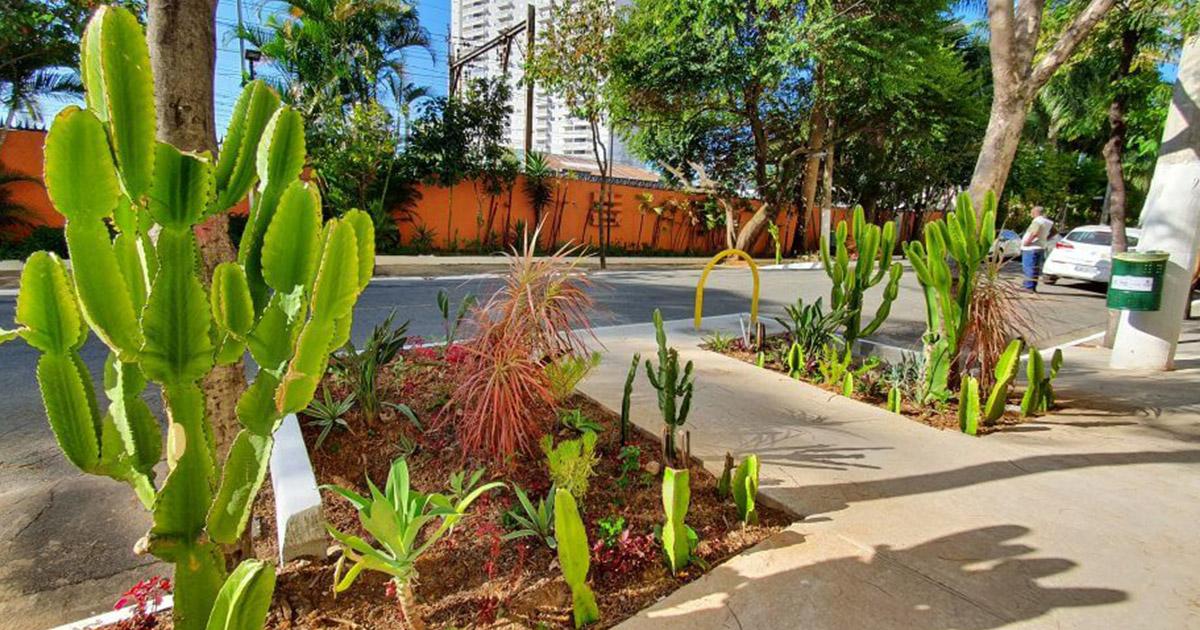 SP transforma vagas de estacionamento em jardins para minimizar alagamentos e poluição nas vias públicas 1