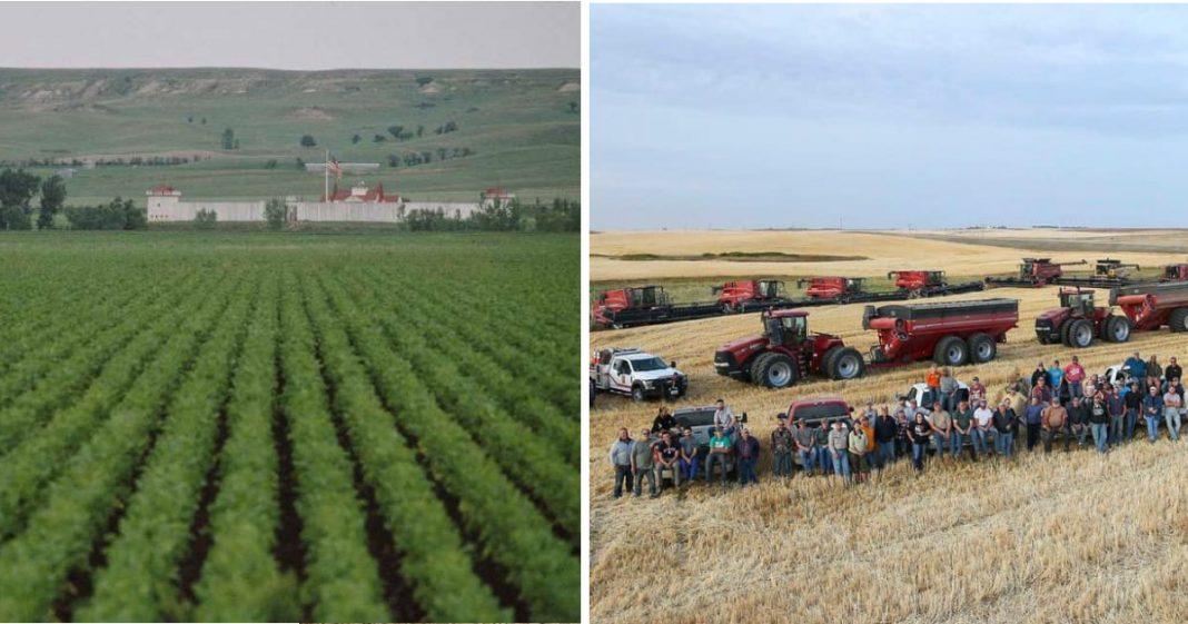 Comunidade nos EUA se reúne para ajudar fazendeiro com a colheita após ele sofrer ataque cardíaco 2
