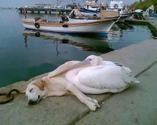 amizades entre animais diferentes especies 1
