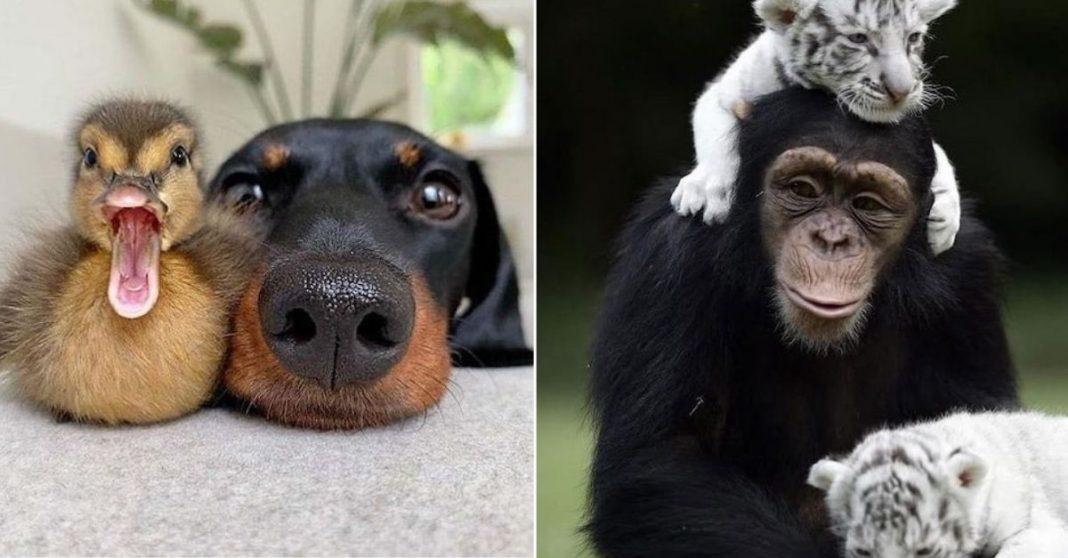 amizades entre animais diferentes especies