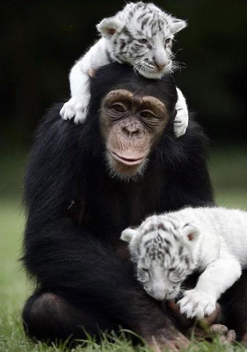 amizades entre animais diferentes especies 11