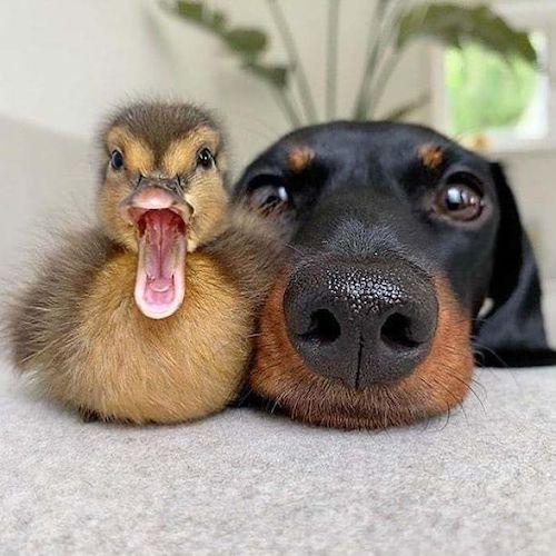 amizades entre animais diferentes especies 12