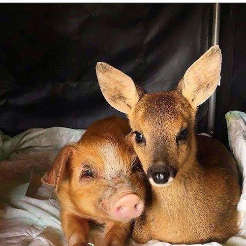 amizades entre animais diferentes especies 14