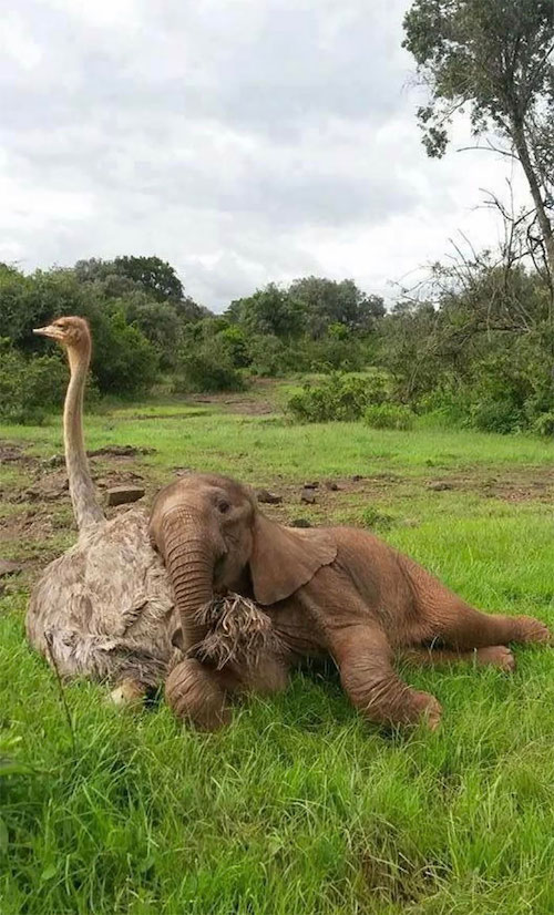 amizades entre animais diferentes especies 15
