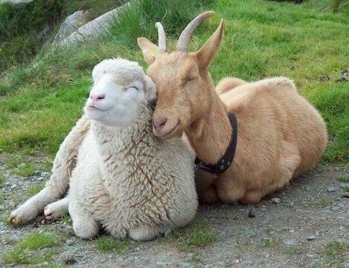 amizades entre animais diferentes especies 17