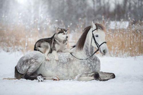 amizades entre animais diferentes especies 18