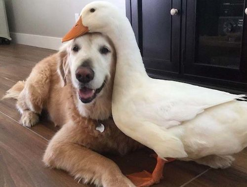 amizades entre animais diferentes especies 19