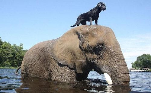 amizades entre animais diferentes especies 2