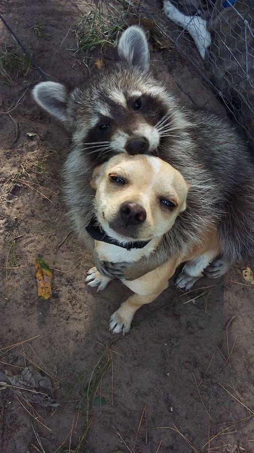 amizades entre animais diferentes especies 3