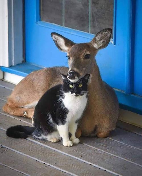 amizades entre animais diferentes especies 4