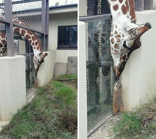 amizades entre animais diferentes especies 5
