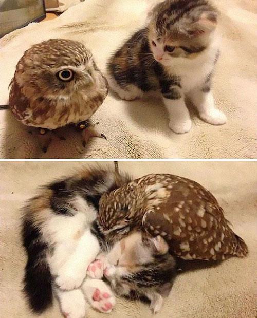 amizades entre animais diferentes especies 6