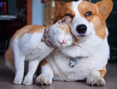 amizades entre animais diferentes especies 7