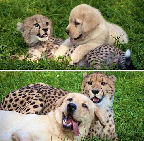 amizades entre animais diferentes especies 8