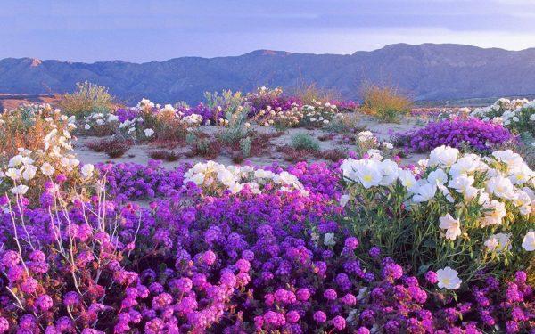 deserto do atacama florido