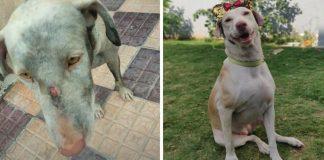 cães e seus tutores
