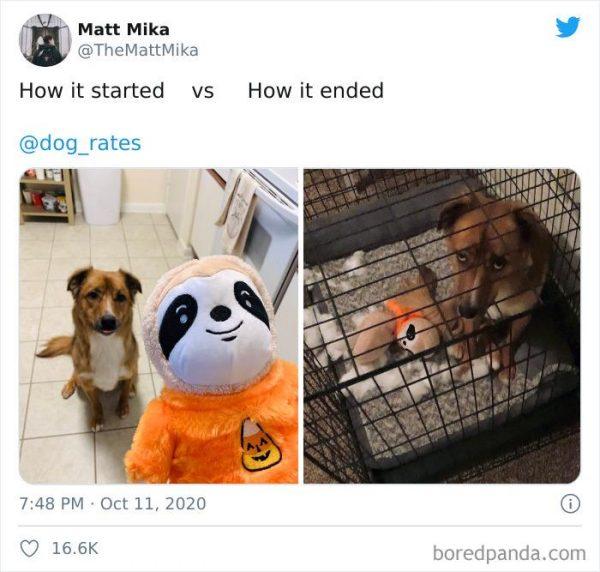 antes e depois de animais e seus tutores