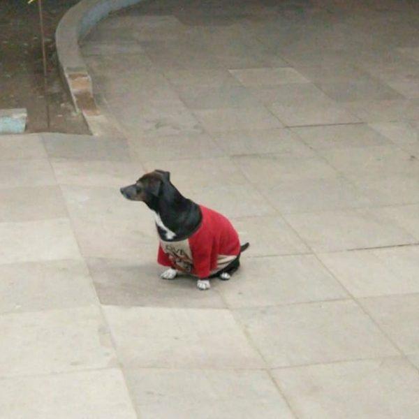 cadelinha esperando o dono