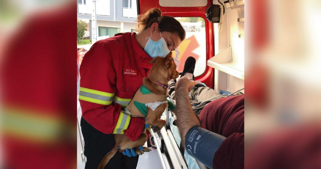bombeira segura cão perto do dono atendido em ambulância