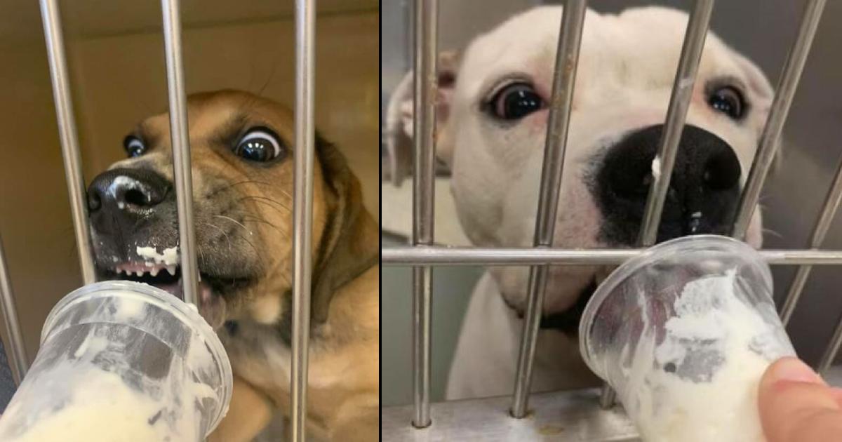 """Mulher alegra o dia de animais em abrigo alimentando-os com """"puppuccinos"""" 4"""
