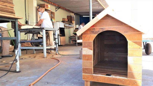 casinhas de madeira para cães de rua