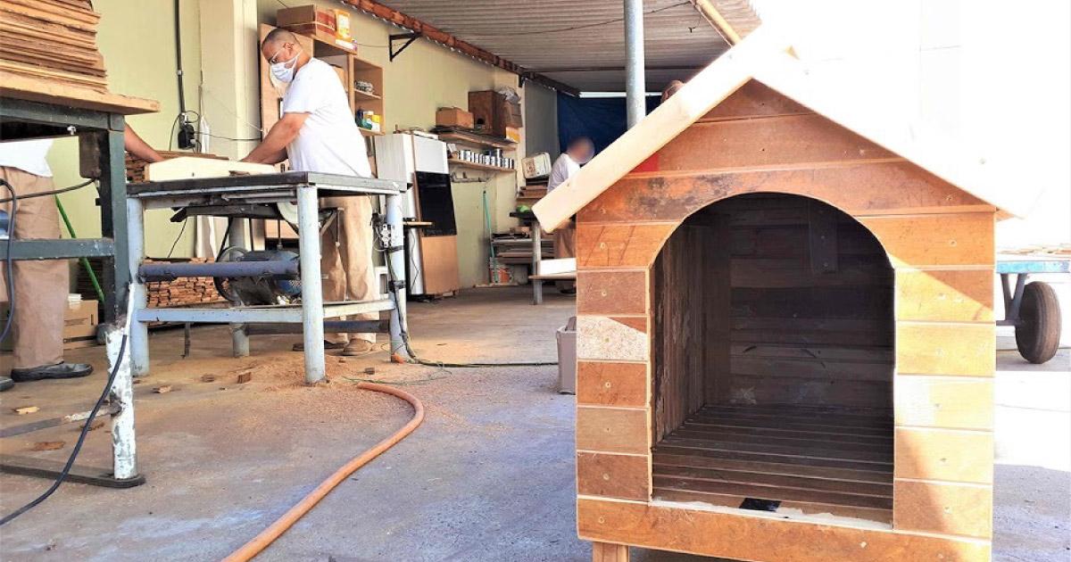 detentos constroem casinha para cães de rua