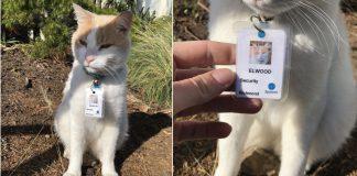 """gato é """"contratado"""" como segurança de hospital"""