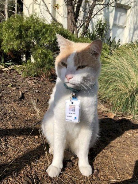 gato é contratado por hospital