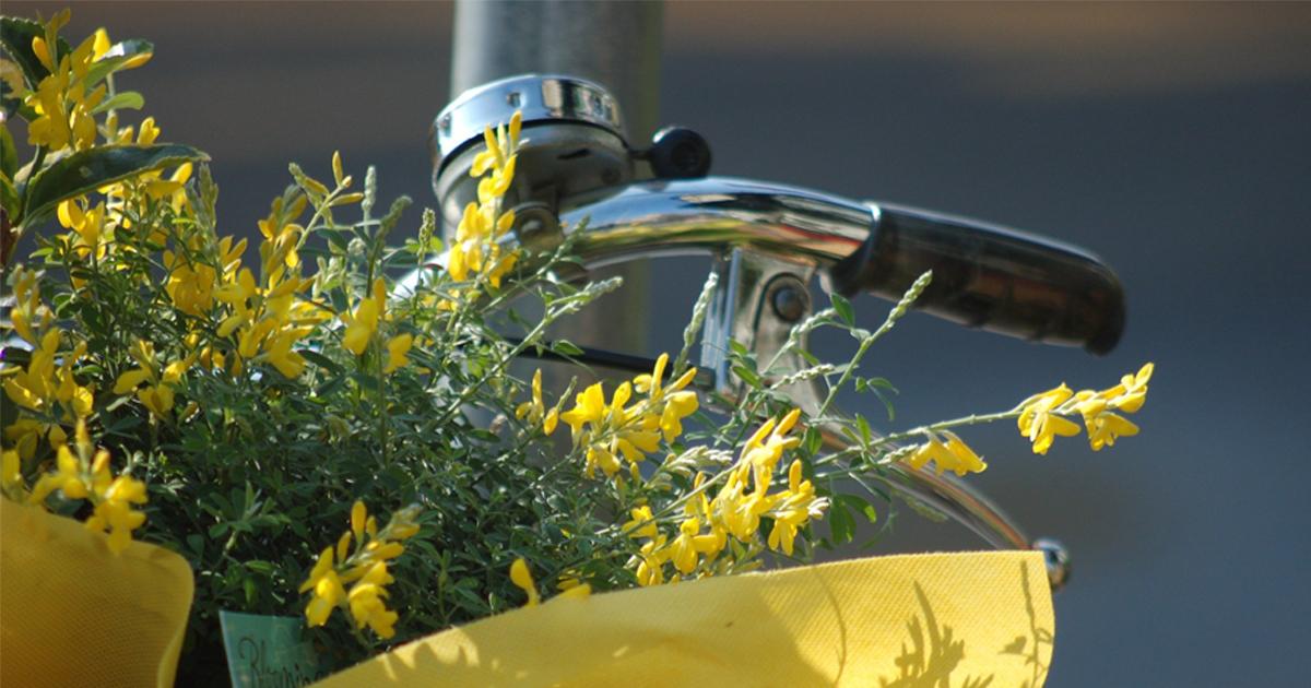 flores cesto bicicleta