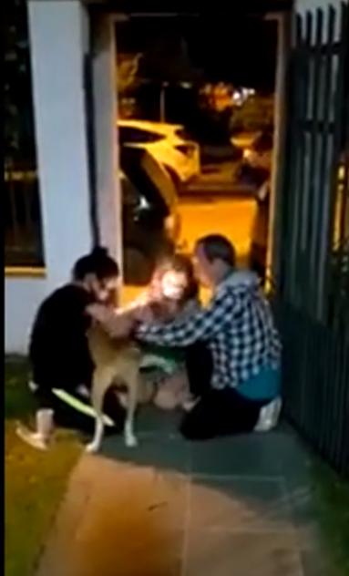 familia se emociona ao reencontrar cão