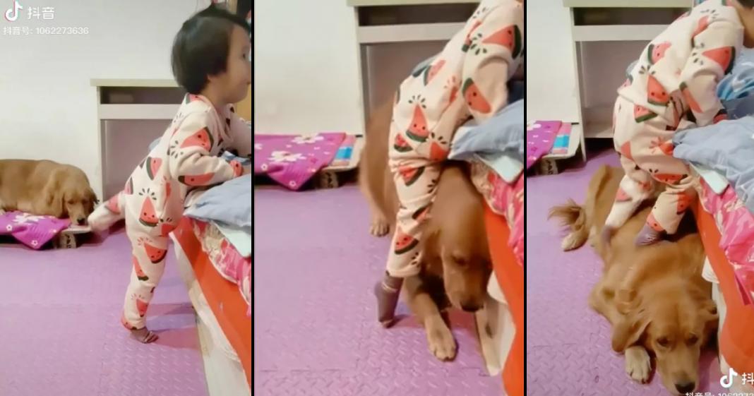 cão ajuda garotinha a subir na cama