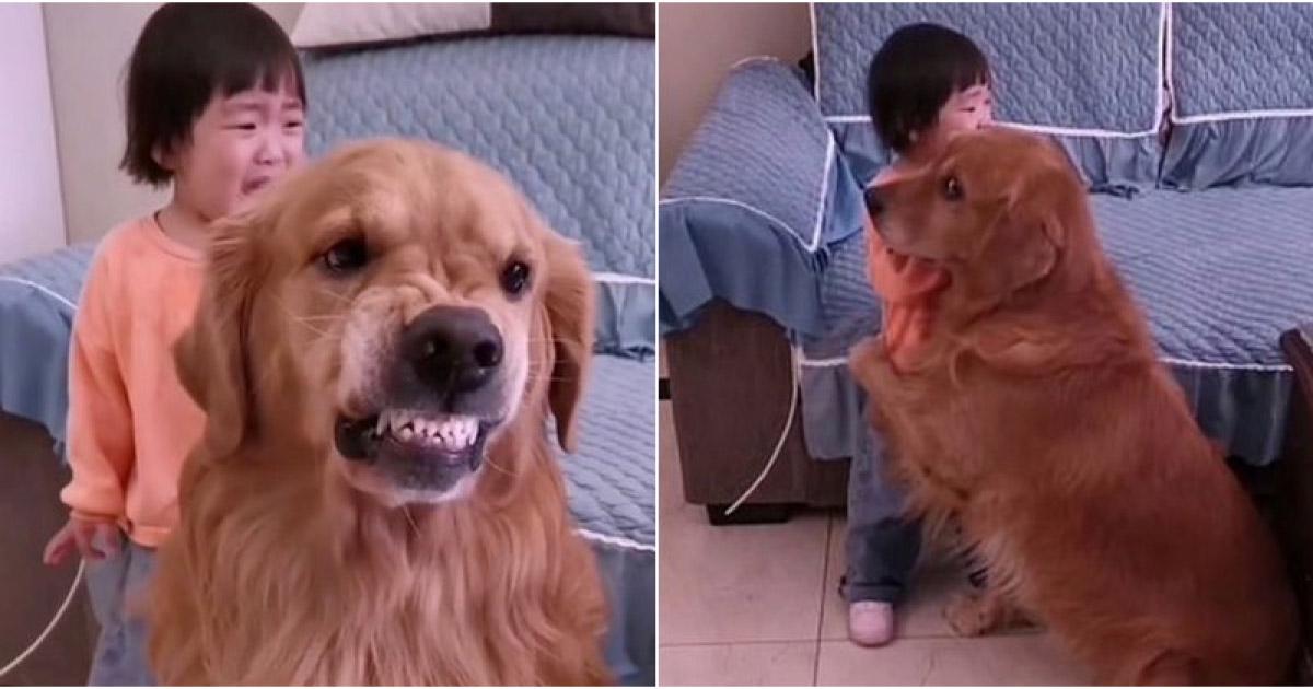 cão protege garotinha