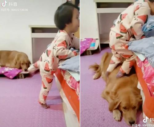 garotinha é ajudada por cachorro
