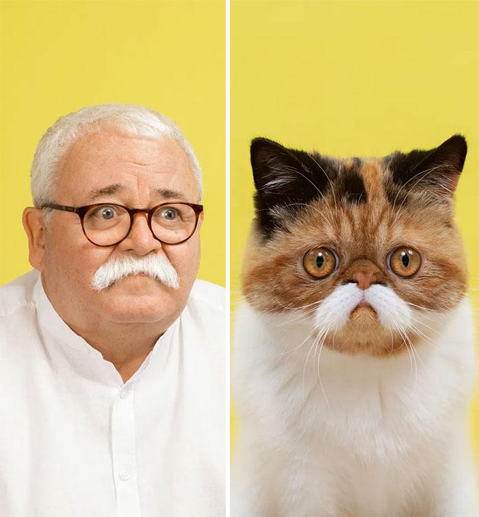Fotógrafo cria coletânea incrível com fotos de gatos e seus sósias humanos 4