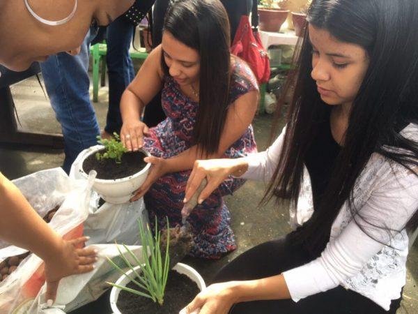 horta comunitária em Paraisópolis