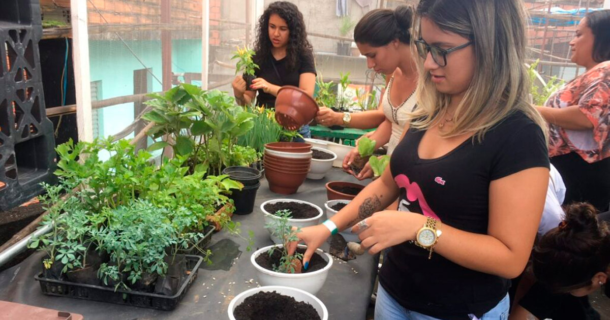 Paraisópolis ganha horta comunitária com capacitação para mulheres vítimas de violência doméstica 2