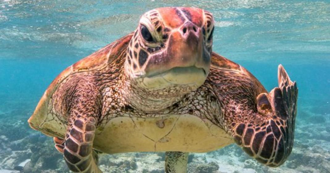 tartaruga mostrando dedo do meio ganha prêmio de melhor foto animal