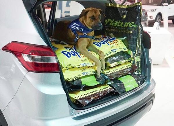 Tucson entrega alimentos
