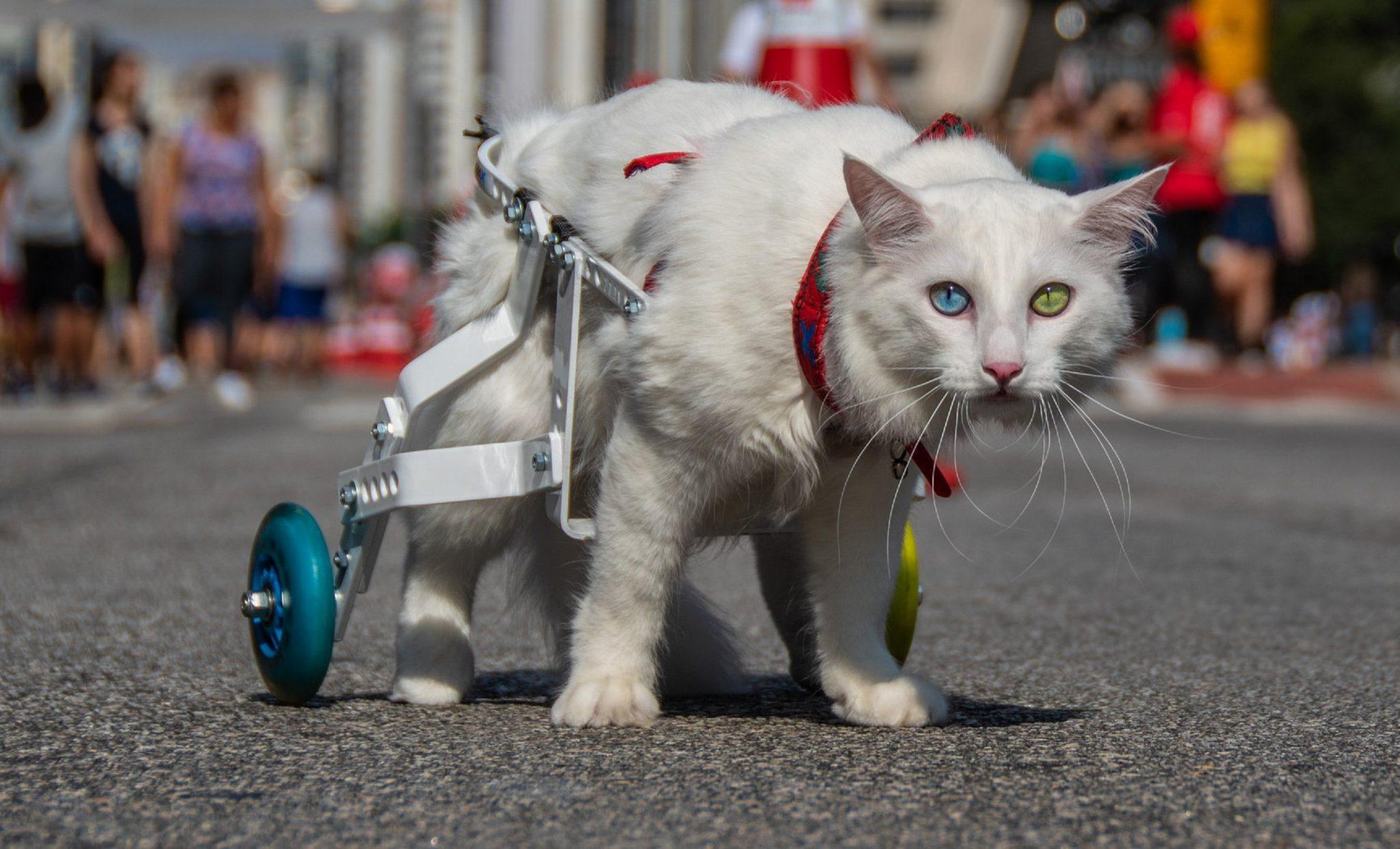 Gatinho paraplégico dá um show de superação e sua história vira fotolivro 1