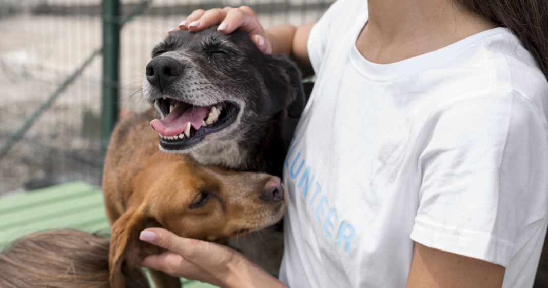 animais de rua na Itália ganham atendimento veterinário gratuito