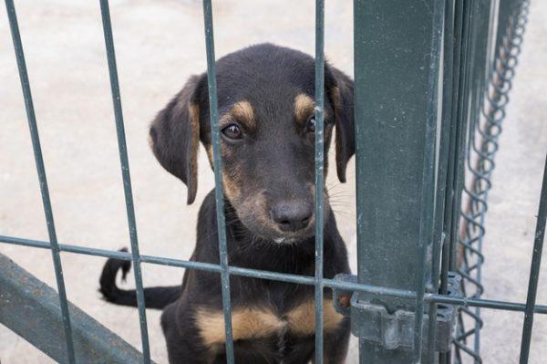cão esperando adoção